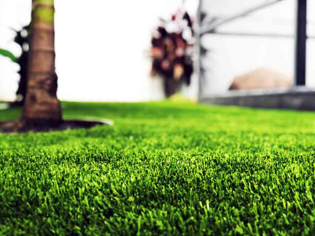 Turf Close-up